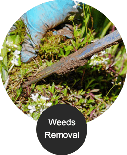 Weeds removal img